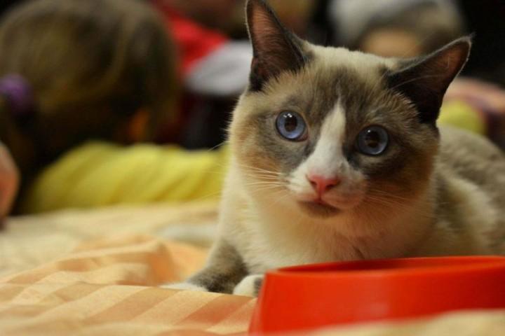 kot wystawa