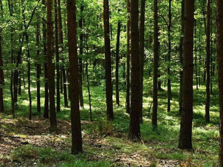 Sezon na komary rozpoczęty- jak chronić się przed owadami w lasach?