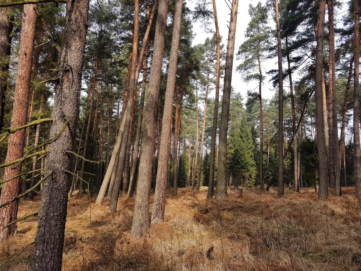 Stan lasów okolic Częstochowy – nie ma najgorzej?