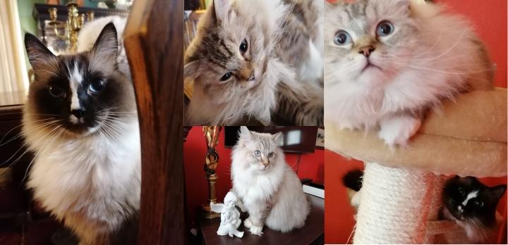 Jak prawidłowo dbać o naszego kota?