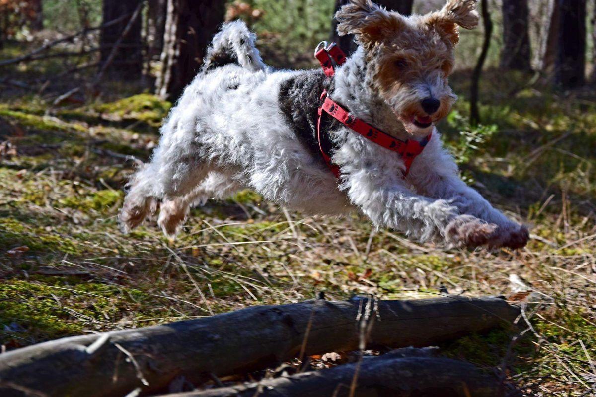 Trucizny dla psów w dzielnicy Północ