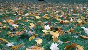Kiedy wrzesień, to już jesień, wtedy jabłek pełna kieszeń