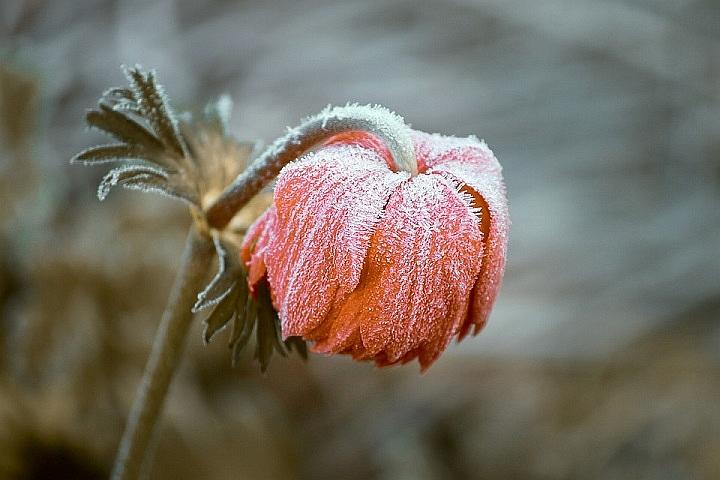 15 maja – obowiązkowe zimno?