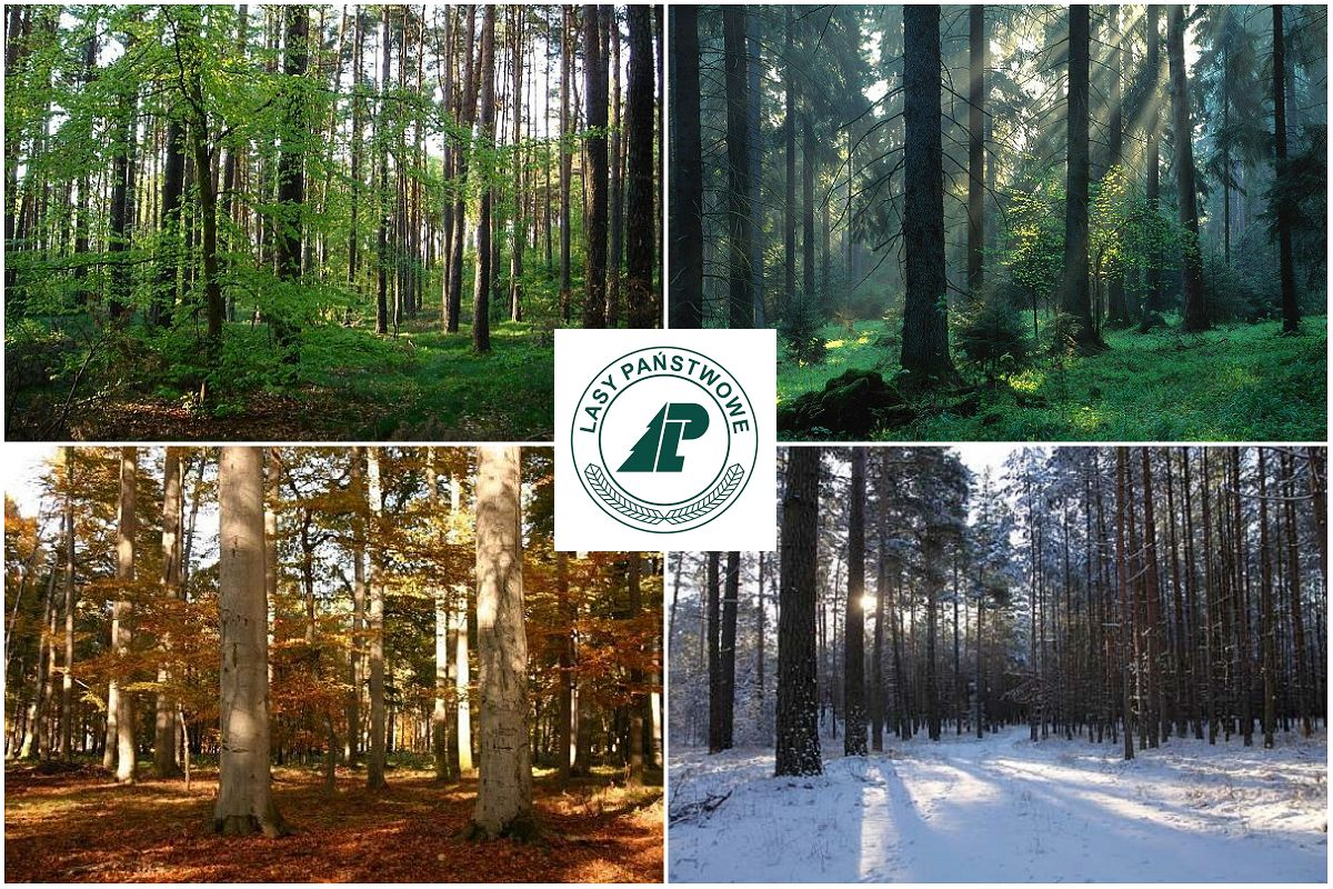 Cztery Pory Lasu – program o lesie nie tylko dla leśników