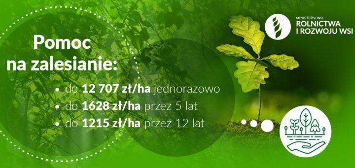 Nabór wniosków o wsparcie na zalesianie